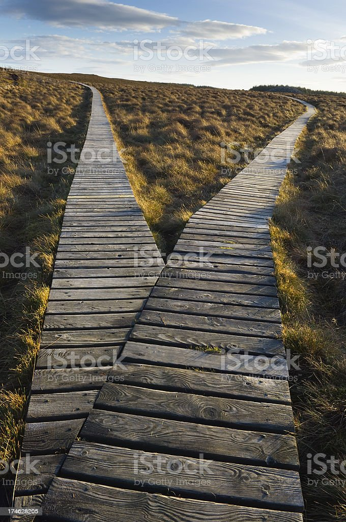 Branch in boardwalk path royalty-free stock photo