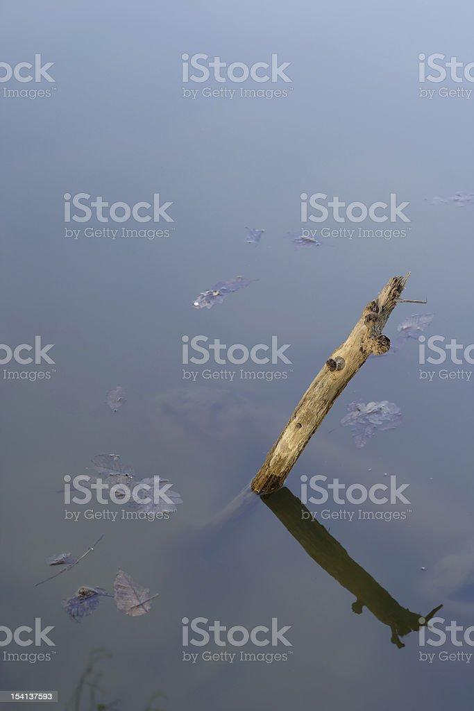 Branch in lake royalty-free stock photo