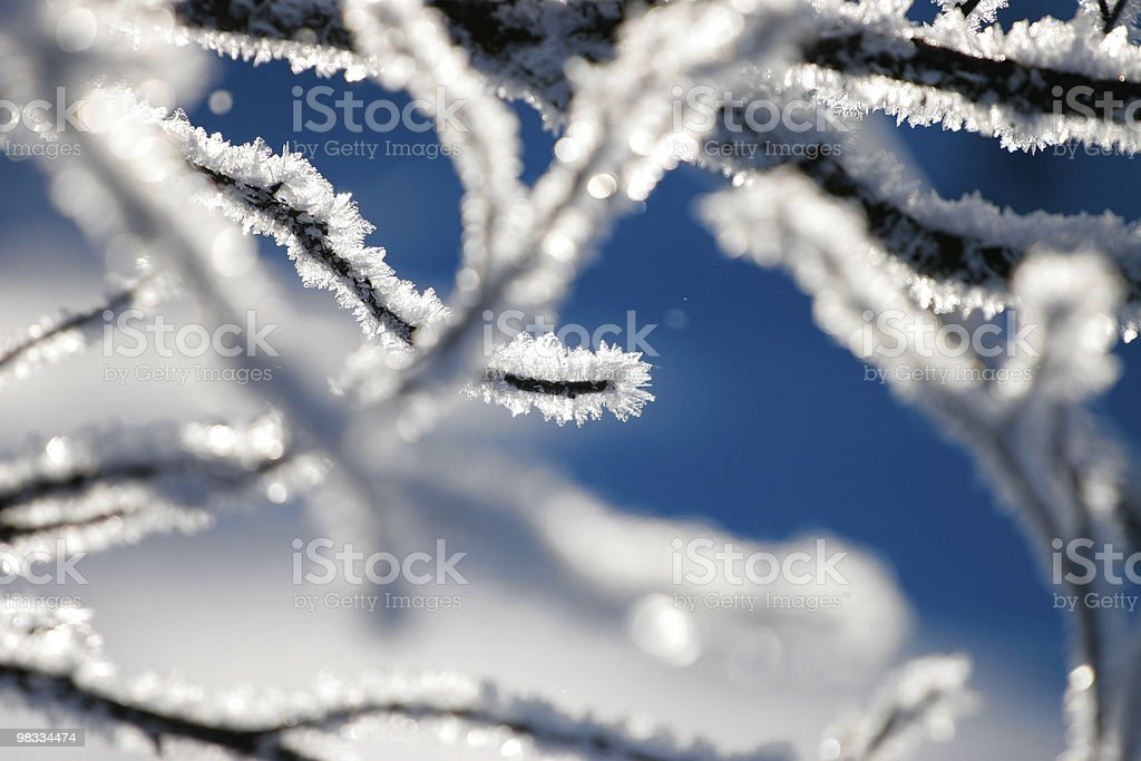 branch in snow royalty-free stock photo