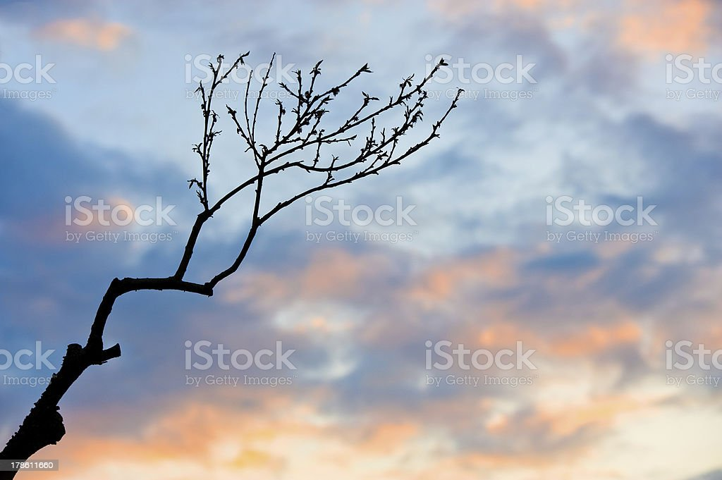 branch in sunset royalty-free stock photo