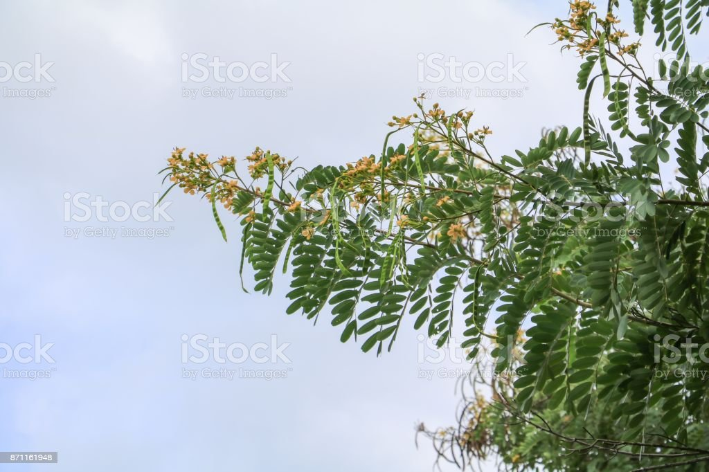 branch leaf of tree beautiful in the forest, bottom view on sky background stock photo