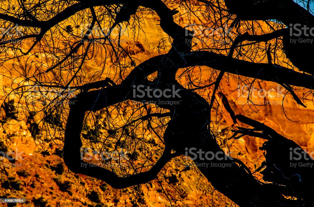 Branch loop stock photo