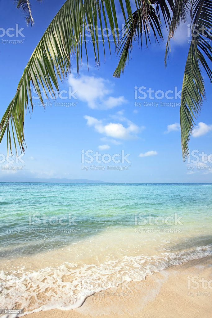 Branch of a palm in the beach. royalty-free stock photo