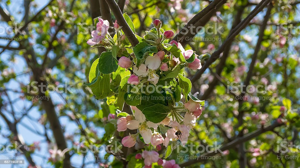 Branch of a tree that blooms stock photo