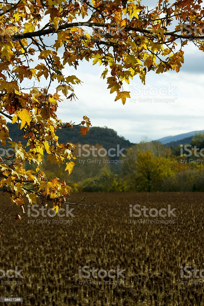 Branch of Autumn royalty-free stock photo