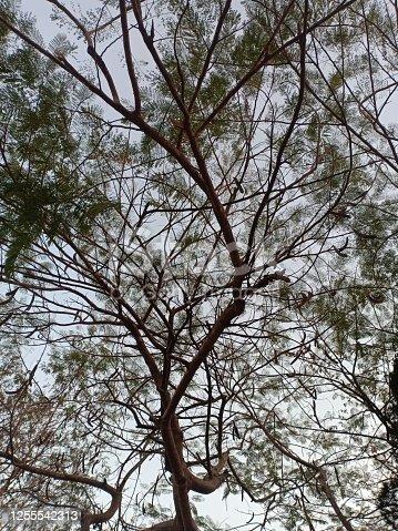 branch of big tree Sprawling through sky