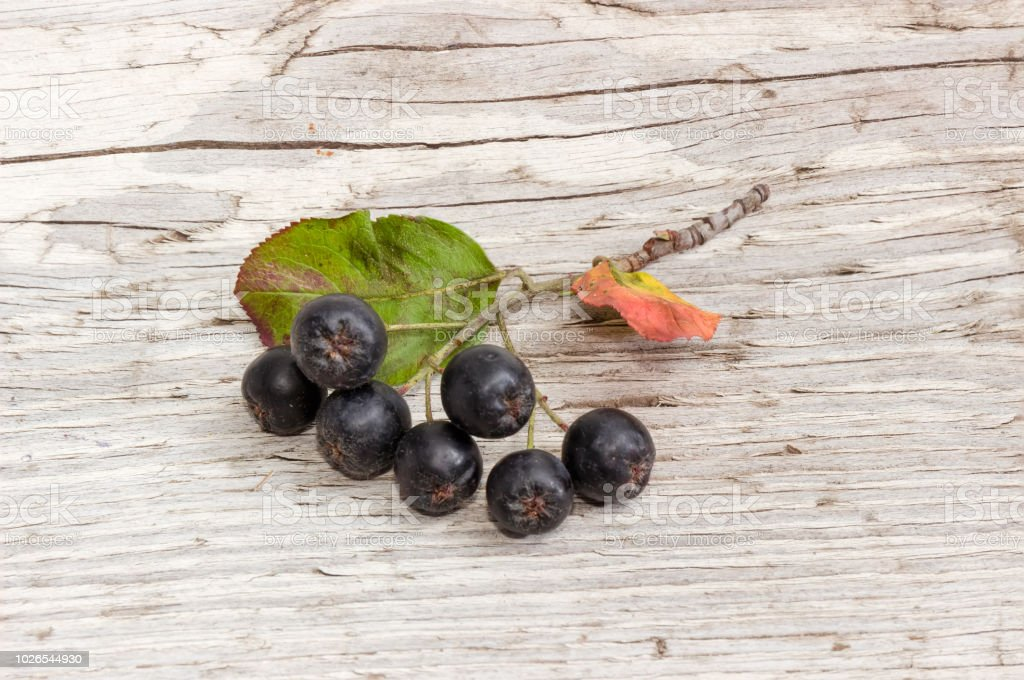 Branch of black chokeberry with berries on old wooden surface – zdjęcie