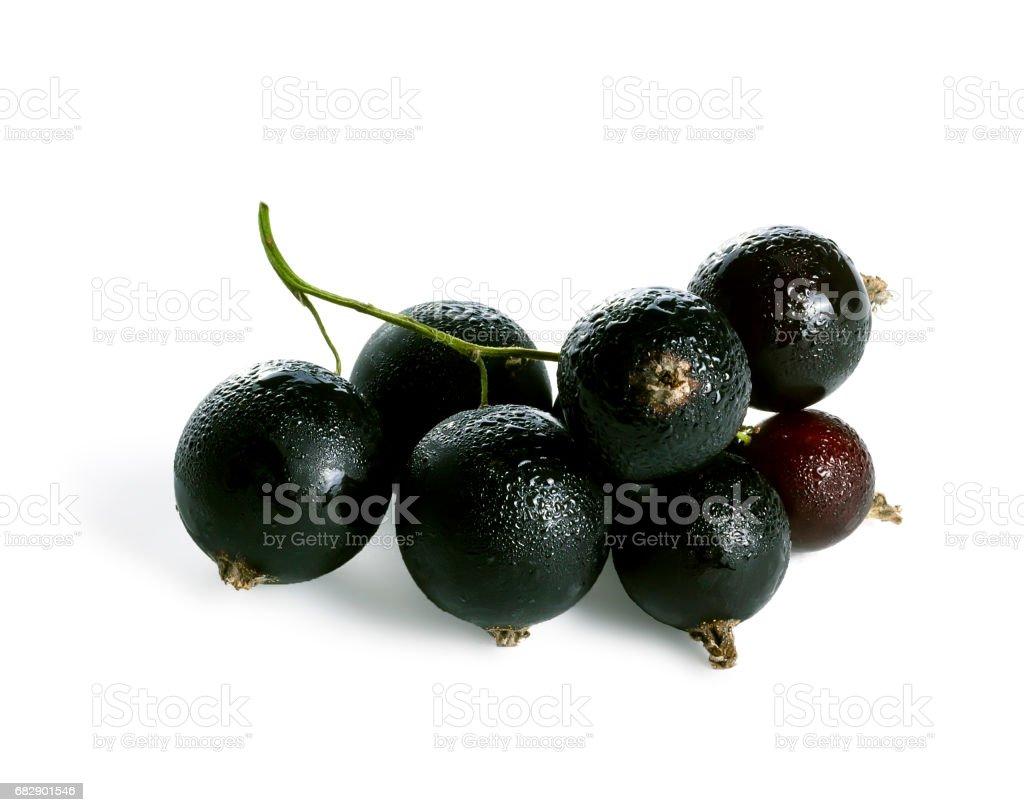 Branch of black currant Lizenzfreies stock-foto