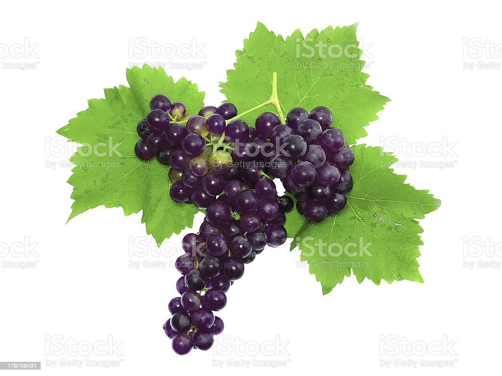 Branch of black grapes . Isolated royalty-free stock photo