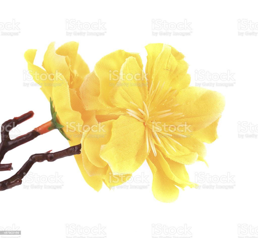 Branch of blooming yellow flowers. royalty-free stock photo