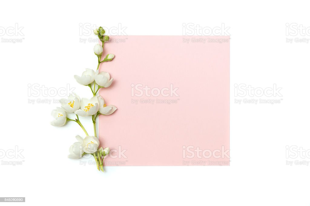 branch of blossoming jasmine and blank pink card stock photo