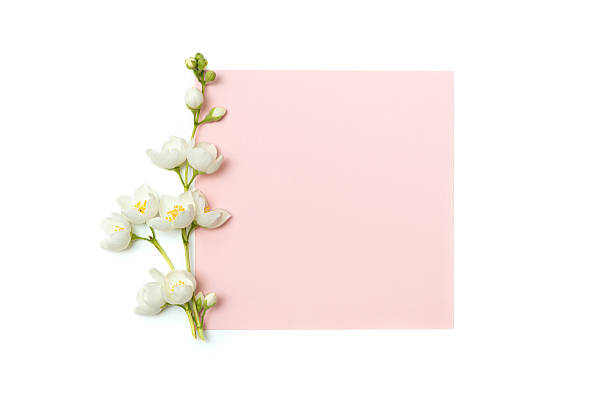 branch of blossoming jasmine and blank pink card - 재스민 뉴스 사진 이미지