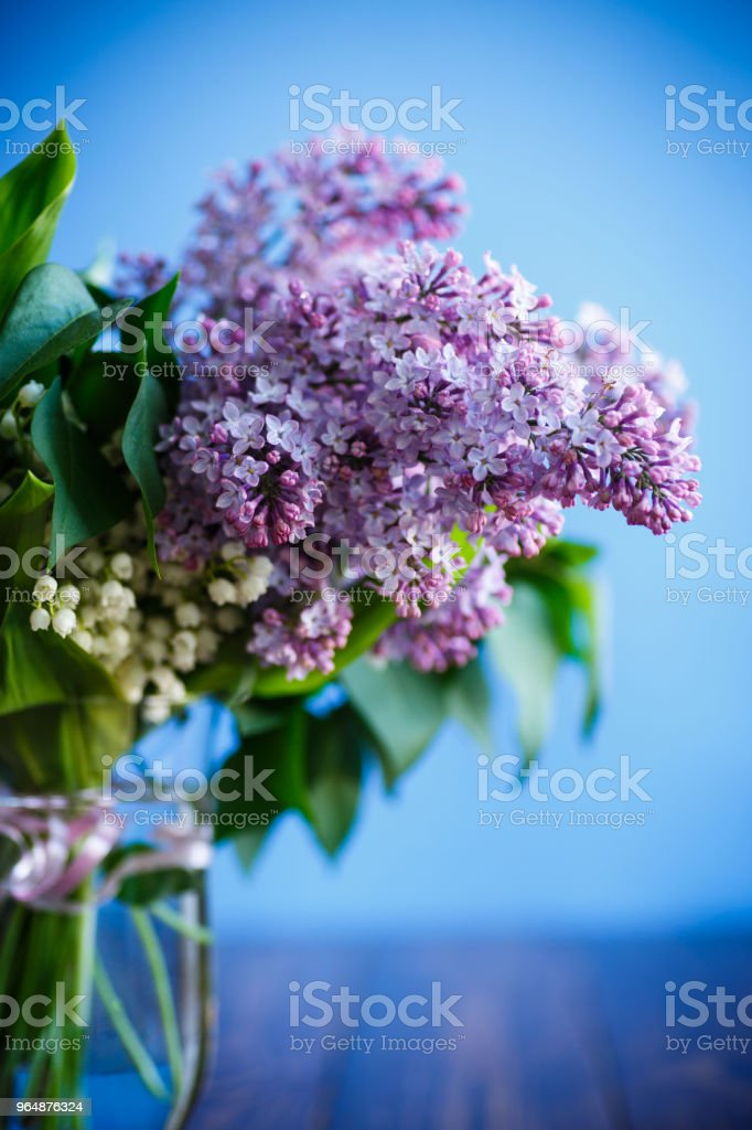 branch of blossoming spring lilac royalty-free stock photo