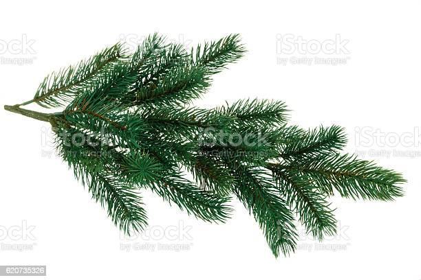 Photo of Branch of fir.