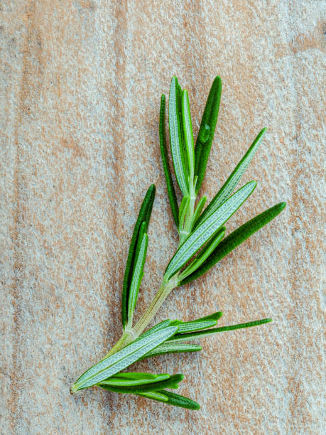 branch of fresh rosemary  on shabby wooden background with flat lay. - oli, aromi e spezie foto e immagini stock