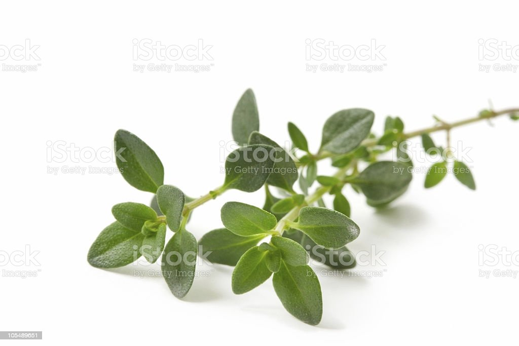 Branch of fresh thyme on white background stock photo