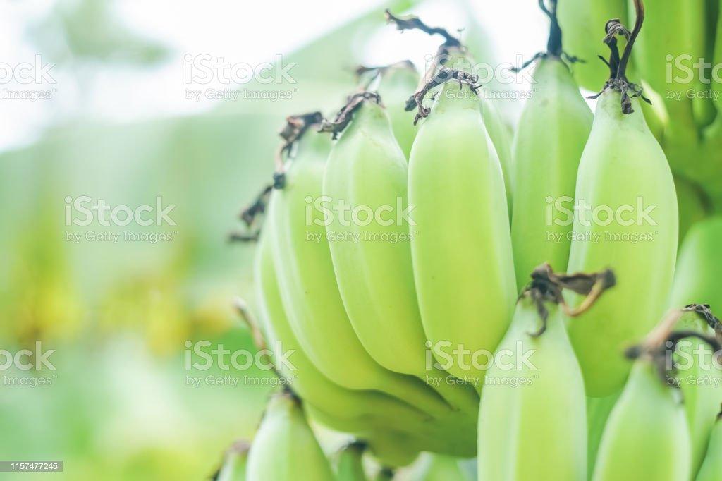 nourriture de branchement rencontres sur tinder