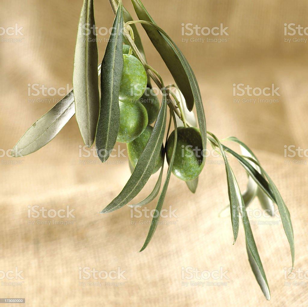 AST mit grünen Oliven auf sackcloth Lizenzfreies stock-foto