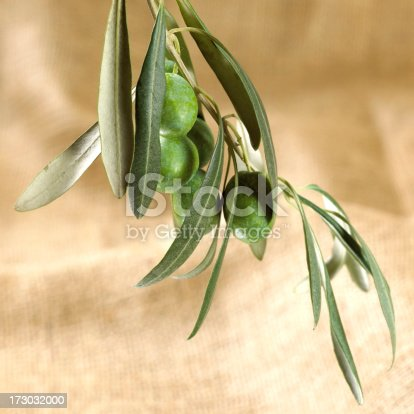 Ast Mit Grünen Oliven Auf Sackcloth Stock-Fotografie und mehr Bilder von Ast - Pflanzenbestandteil
