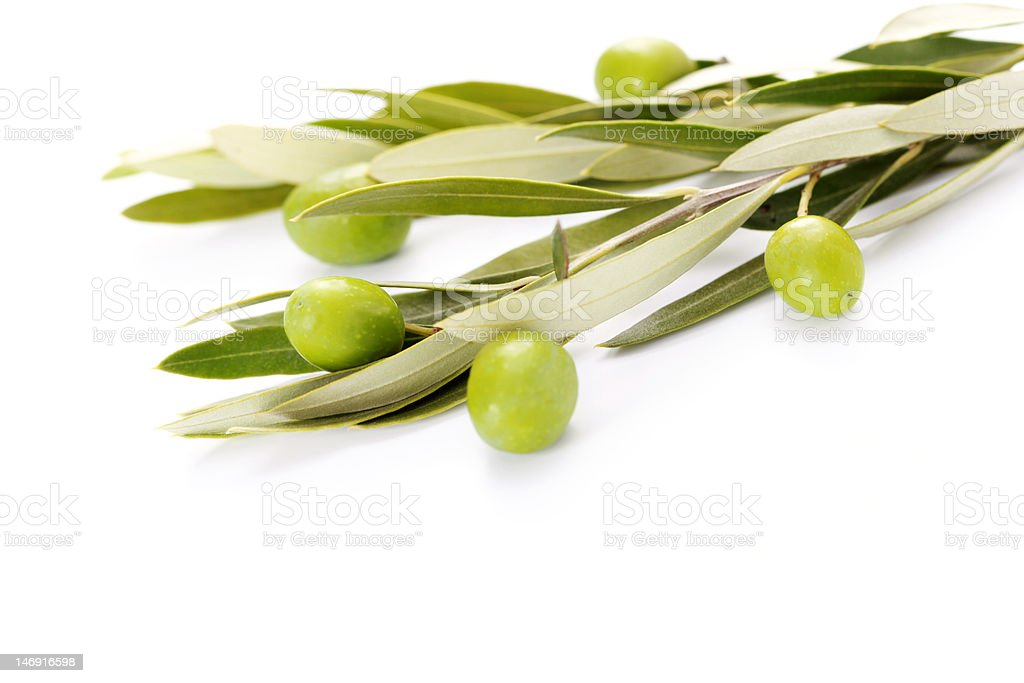 branch of green olives royalty-free stock photo