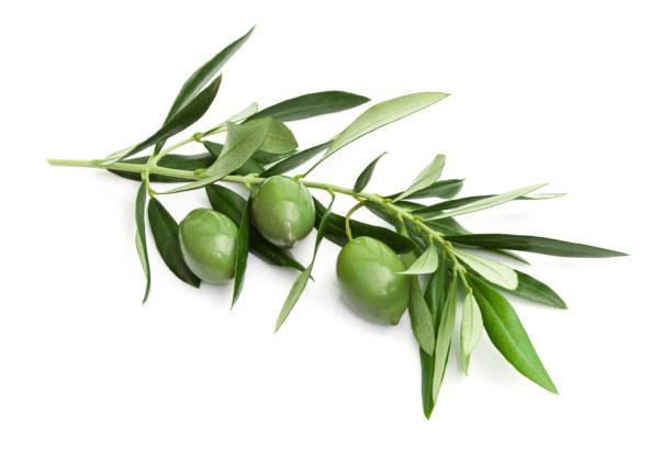 branch of green olives - ramoscello d'ulivo foto e immagini stock