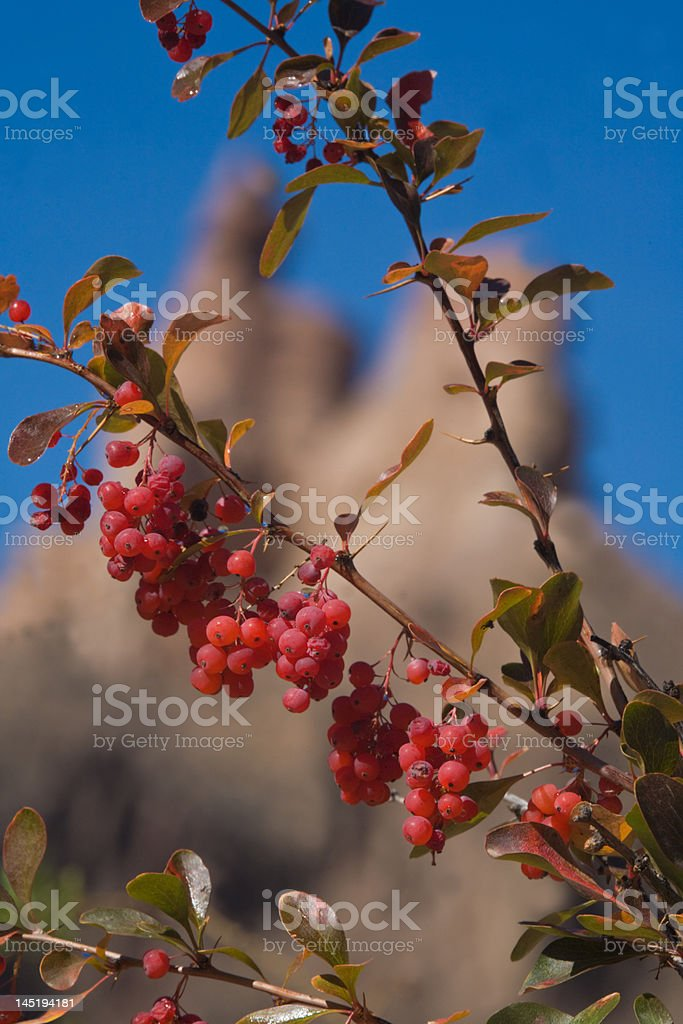 Branch of hawthorn in Charyn canyon royalty-free stock photo