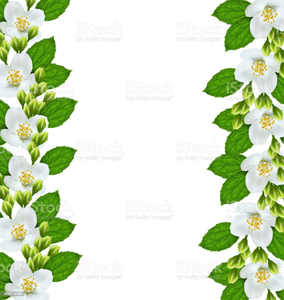 Branch Of Jasmine Flowers Stock Photo More Pictures Of Autumn Istock