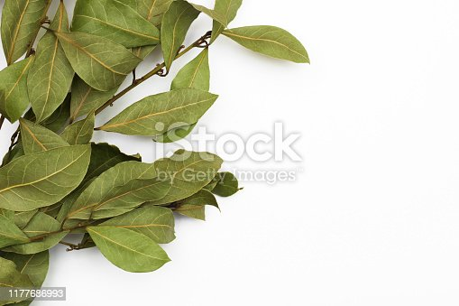 A branch of laurel isolated on white background. Branch of green laurel leaves. Leaves of Laurus Nobilis, used in cooking as a spice. Copy space for text