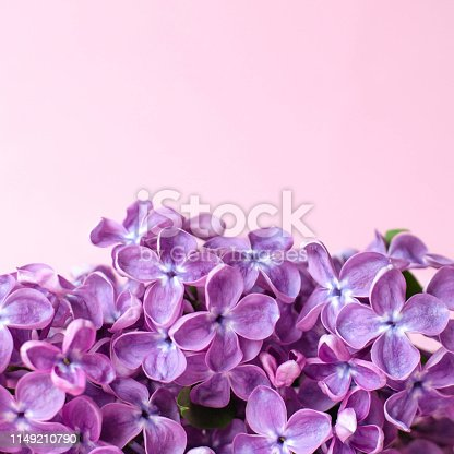 1147995495 istock photo A branch of lilac on a pink light background. 1149210790