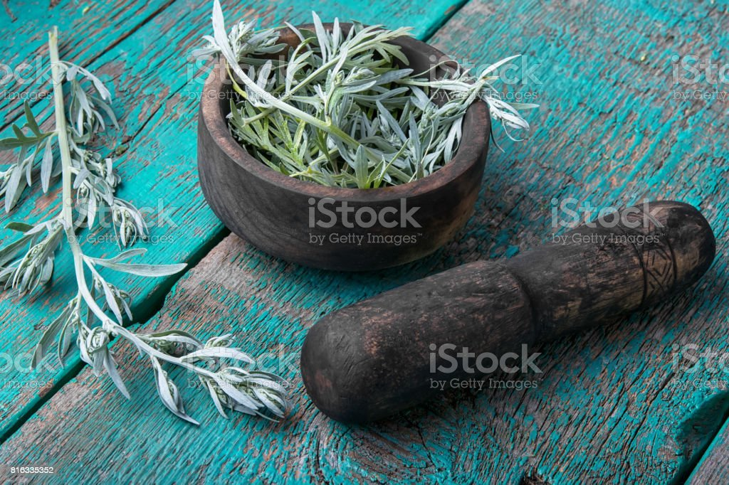 Branch of medicinal wormwood stock photo