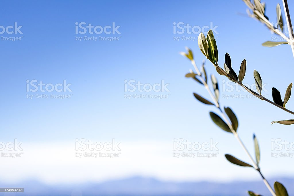 Branch of olive tree and blue sky royalty-free stock photo