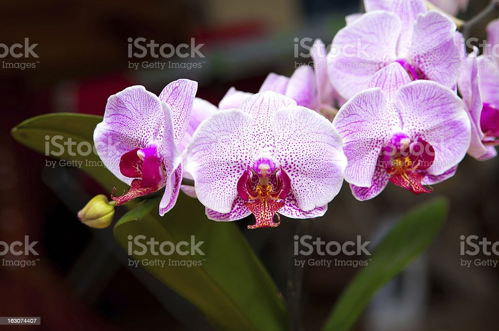 branch of orchids stock photo