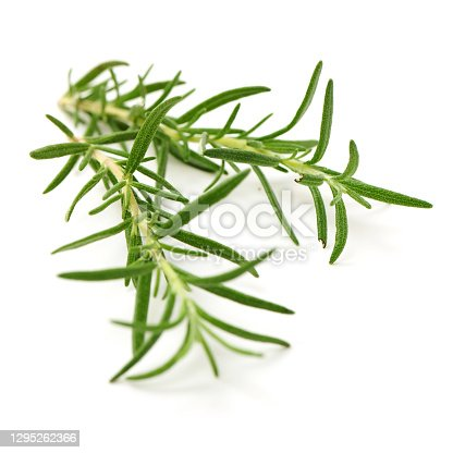 Branch of rosemary on white background.