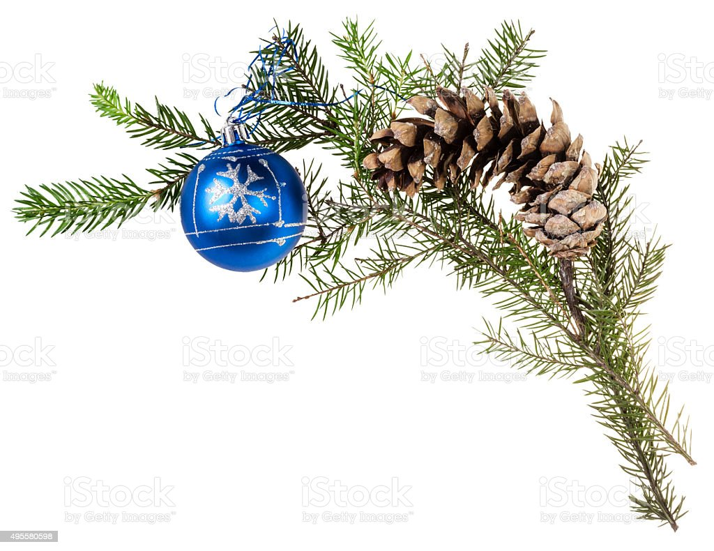branch of spruce tree with cone and blue ball stock photo