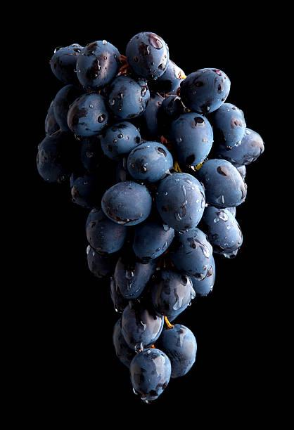 Rama de uva sobre fondo negro con fregadero - foto de stock