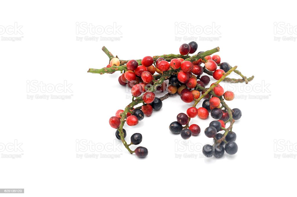 branch on black berry ストックフォト