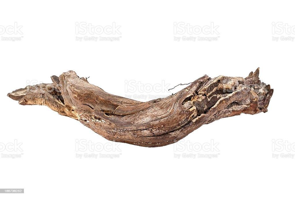 Branch - foto de stock