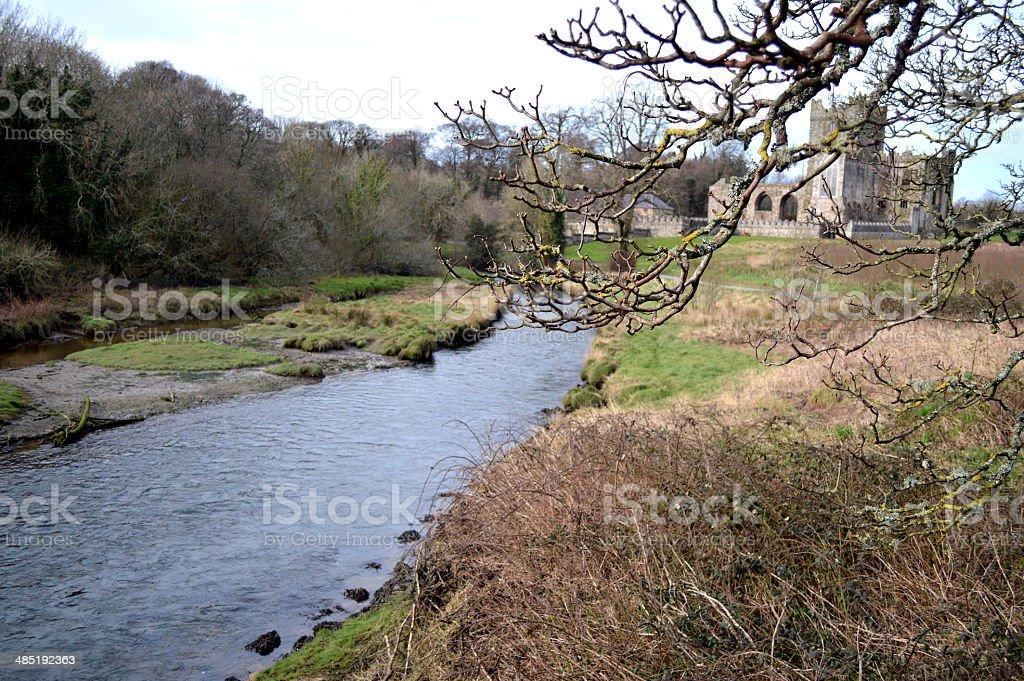 Branch & River stock photo