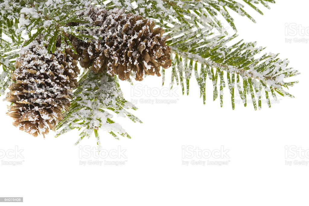 branch spruce and cones royalty-free stock photo