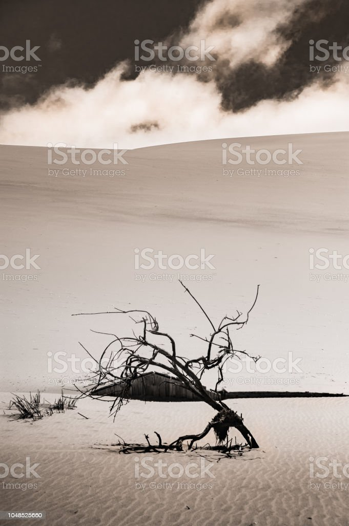 Branch Standing in the Sand stock photo