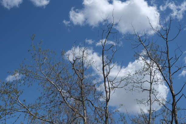 Branch Stretch stock photo
