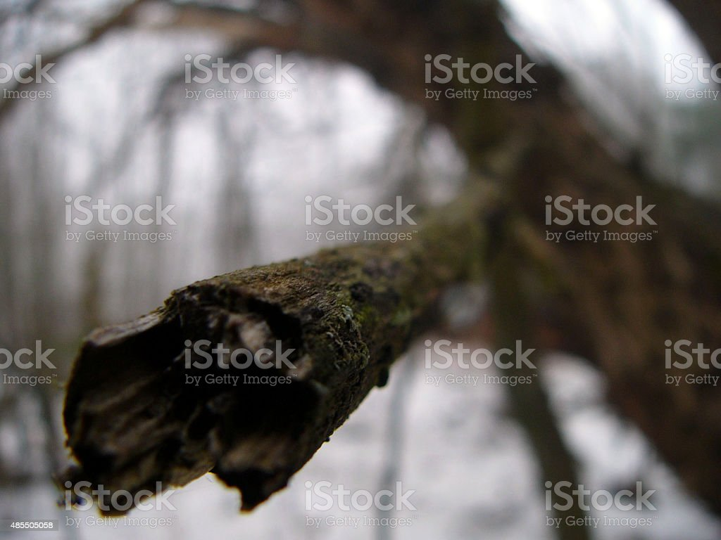 branch up close stock photo