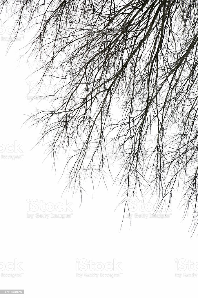 Branch Veins stock photo
