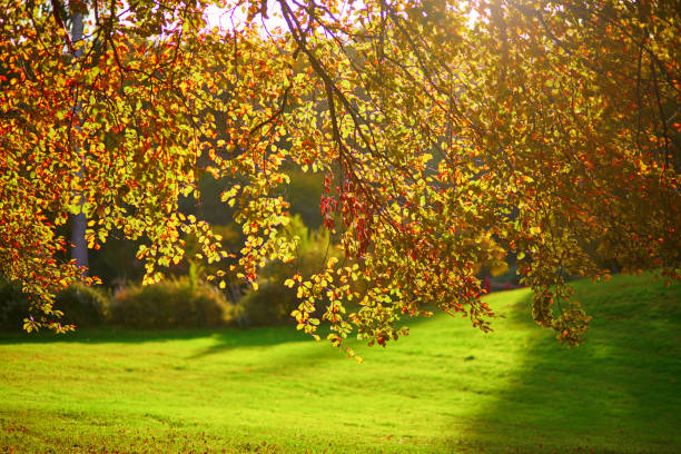 Branch with autumn leaves on a sunny fall day stock photo