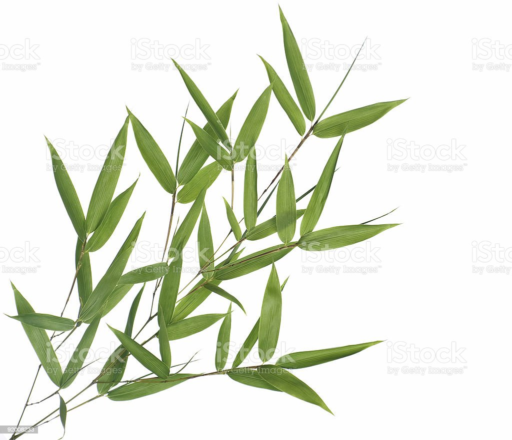 branch with bamboo-leaves stock photo