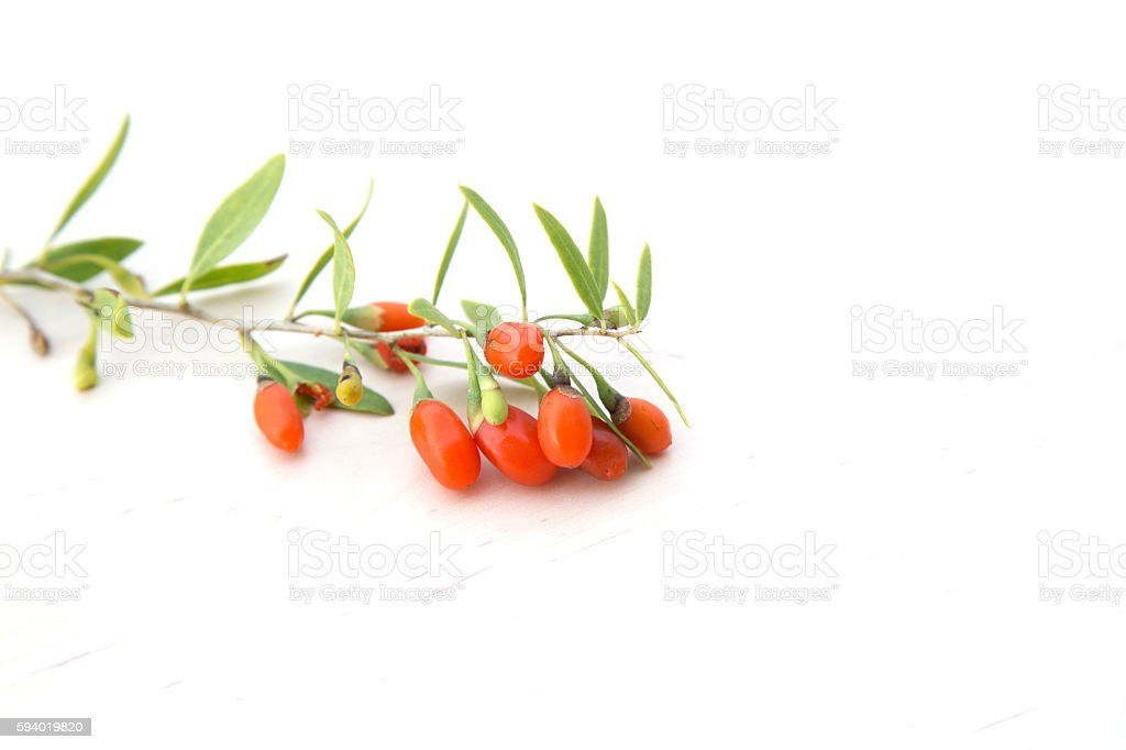 branch with goji berries stock photo