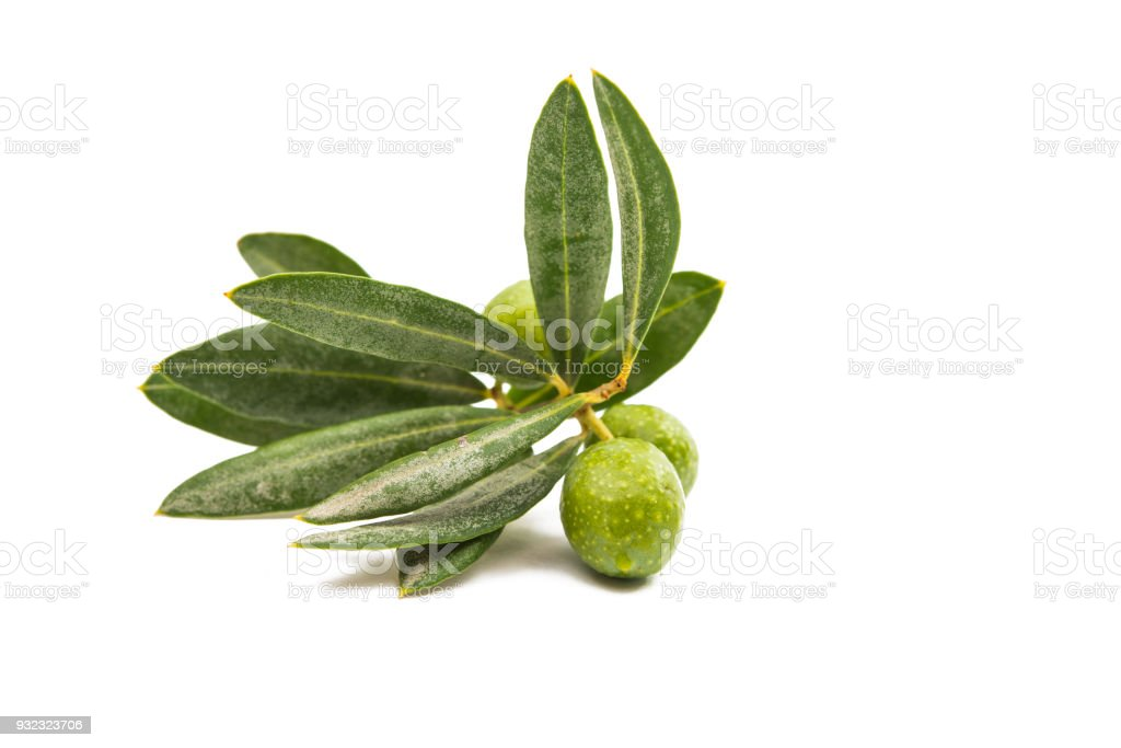 branch with green olives isolated stock photo