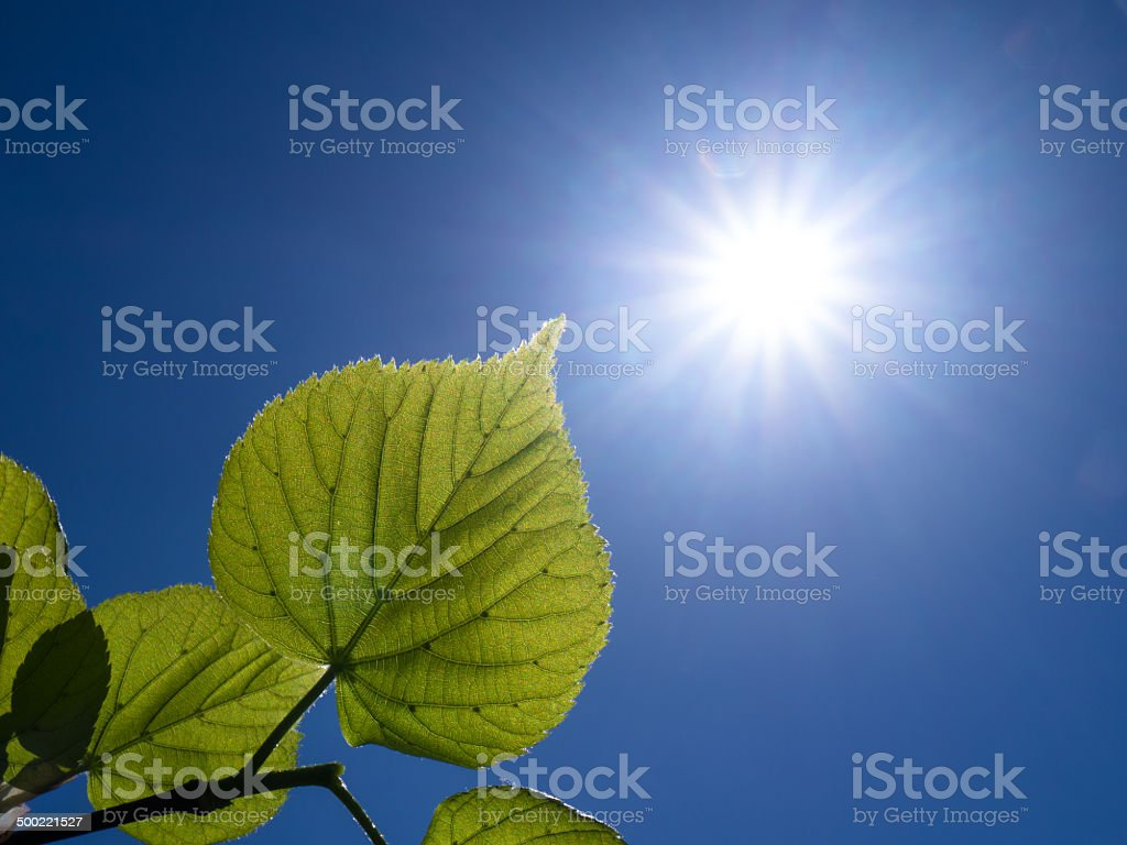 branch with leaves and sun stock photo