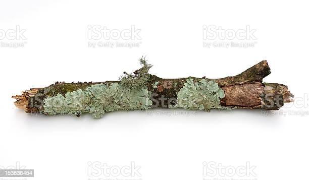 Photo of Branch with Lichen