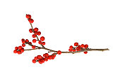 istock Branch with red berries 157523895